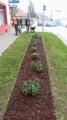 Sadnja cvijeća -1