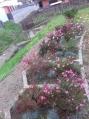 Sadnja cvijeća -3