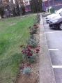 Sadnja cvijeća -6